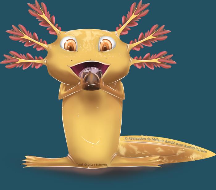 Que ne peut-on absolument pas donner à manger à l'Axolotl ?